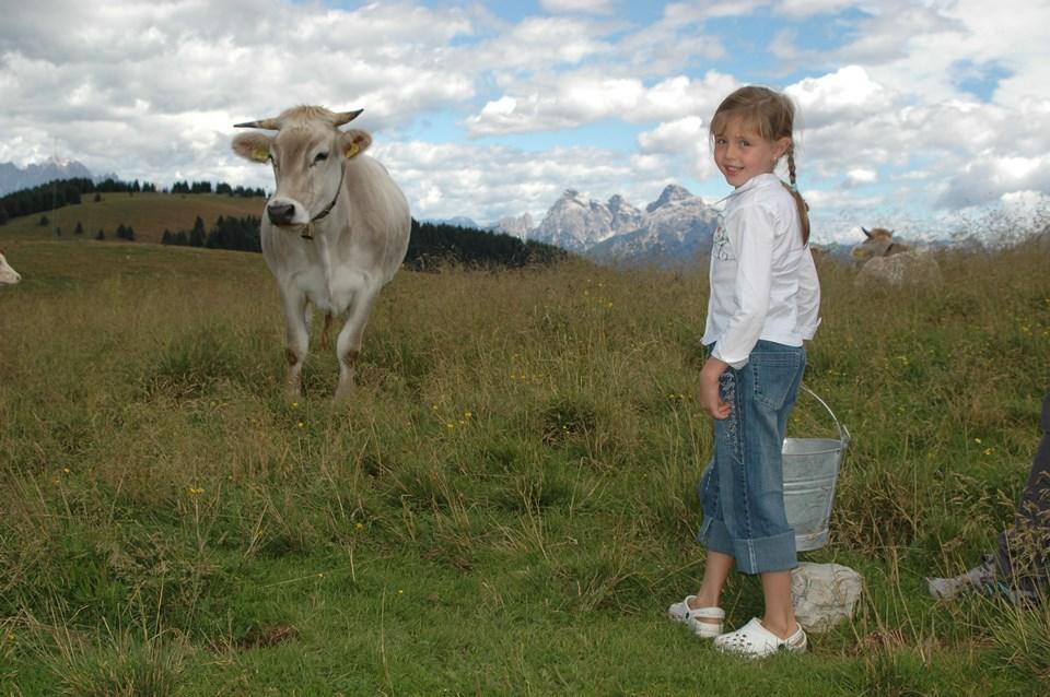 adopteer een koe in valsugana