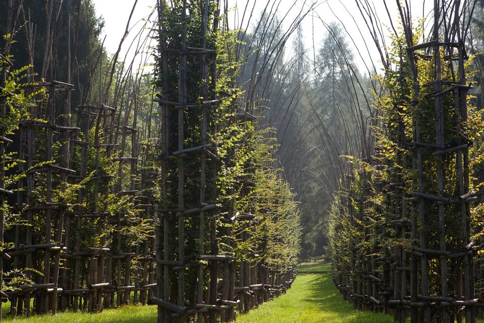 Cattedrale Vegetale di Giuliano Mauri- @Arte Sella